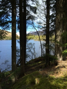 Loch Ossian through the trees